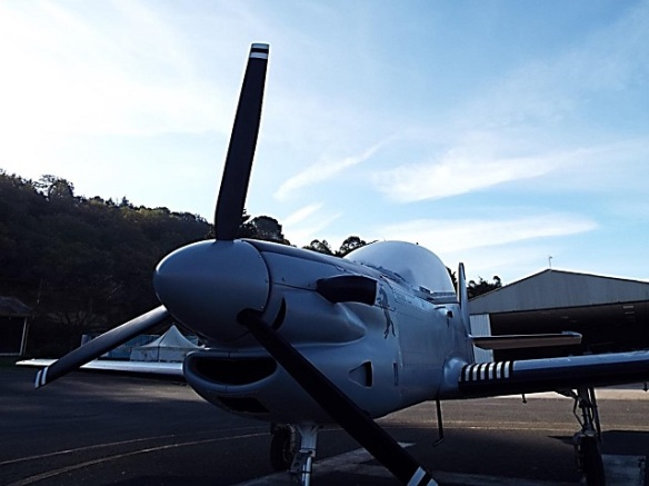 Tucano in the morning